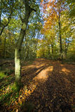 Pathway through a forest in autumn. Pathway through a beautiful forest in Oxfordshire, England, in autumn. Patches of strong morning light partially light the Royalty Free Stock Photo