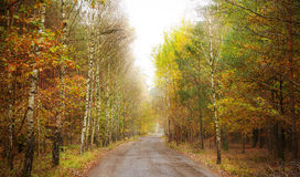 Pathway through a forest in autumn Royalty Free Stock Photography