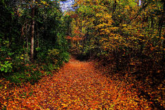 Pathway in the Forest. In Autumn colors Stock Photography