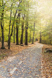 Pathway through the forest in autumn Royalty Free Stock Photo