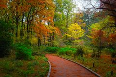 Pathway in the forest in autumn by daytime. Pathway in the forest in autumn with red, orange, green and brown plants, trees and leaves Stock Image