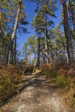 Pathway in a forest in autumn Royalty Free Stock Photo