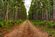 Pathway in a forest Stock Images