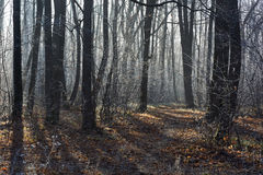 Pathway in the  forest covered with frost. Stock Photography