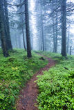 Pathway in forest in fog Royalty Free Stock Image