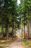 Pathway in the forest with green trees. And vegetation during daytime Stock Image