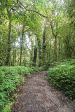 Pathway in the forest. Royalty Free Stock Images
