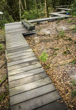 Pathway in the forest. Royalty Free Stock Photos