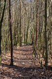 Pathway in a forest Royalty Free Stock Images