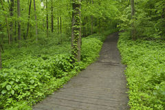 Pathway through forest. Royalty Free Stock Photo