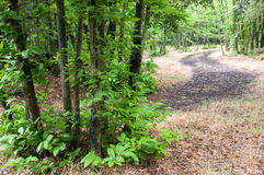 Pathway in the forest Royalty Free Stock Images
