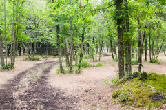 Pathway in the forest Stock Images