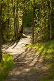Pathway in forest. At summer day nature background Stock Photos