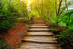 Pathway in forest. Plitvice lakes, Croatia Royalty Free Stock Photos