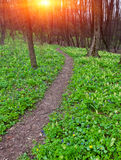 Pathway in forest Stock Images