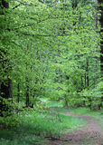 Pathway in forest Royalty Free Stock Image