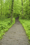 Pathway through forest in spring. Royalty Free Stock Photo