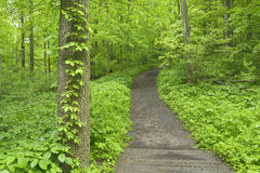 Pathway through forest in spring. Royalty Free Stock Image