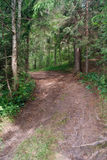 Pathway in the forest Royalty Free Stock Image
