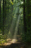 Pathway in forest with sunbeams Stock Images