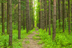 Pathway in the forest Royalty Free Stock Photo