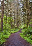 Pathway in Forest with tall trees. Pathway in nature with tall trees and green foliage along hiking trail stock images