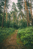 Pathway through the forest Stock Photography