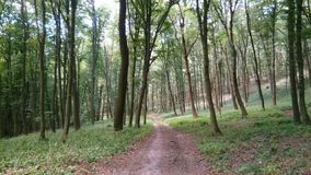 Pathway in forest in the West Slovakia stock image
