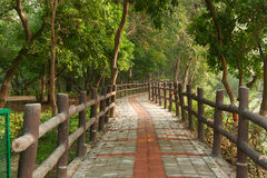 Pathway in forest with wooden side rails Stock Photos