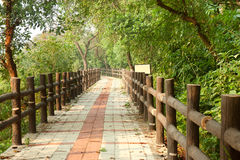 Pathway in forest with wooden side rails Stock Photo