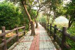 Pathway in forest with wooden side rails Royalty Free Stock Photography