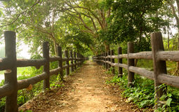 Pathway in forest with wooden side rails Royalty Free Stock Photos