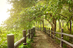 Pathway in forest with wooden side rails Royalty Free Stock Photo