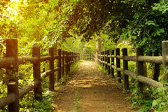 Pathway in forest with wooden side rails Royalty Free Stock Images