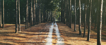 Pathway Forrest Rural Trail Nature Concept royalty free stock photos