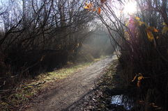 A pathway found. Rays of light revealing a pathway Royalty Free Stock Photography