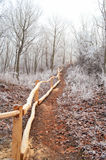 Pathway in the frozen forest. Photography of pathway in the frozen forest Czech republic - Kuneticka hora Royalty Free Stock Image