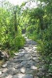 Pathway in the garden. Pathway in the green garden Stock Images