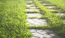 Pathway in garden Royalty Free Stock Image