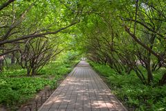 Pathway going under the trees Stock Photography