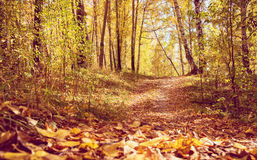 Pathway through Golden Fall Forest in Park Royalty Free Stock Photography