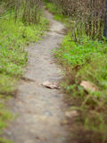 A pathway through the grass stock photography