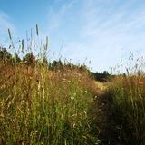 Pathway through the grass meadow. Sunny summer day Royalty Free Stock Images