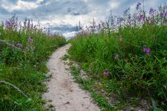 Pathway in the grass with megenta violet flowers stock photography