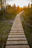 Pathway in green forest Stock Photography