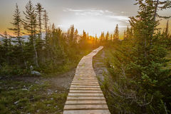 Pathway in green forest Stock Image