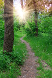 Pathway in green forest Royalty Free Stock Photos