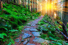 Pathway in green forest Royalty Free Stock Image