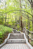 Pathway among green forest. Stock Image