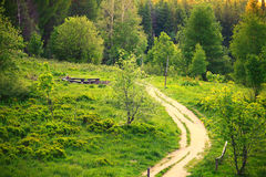 Pathway in green forest Poland Bieszczady. Pathway in beautiful green forest mountains hills landscape Poland Bieszczady Stock Photo